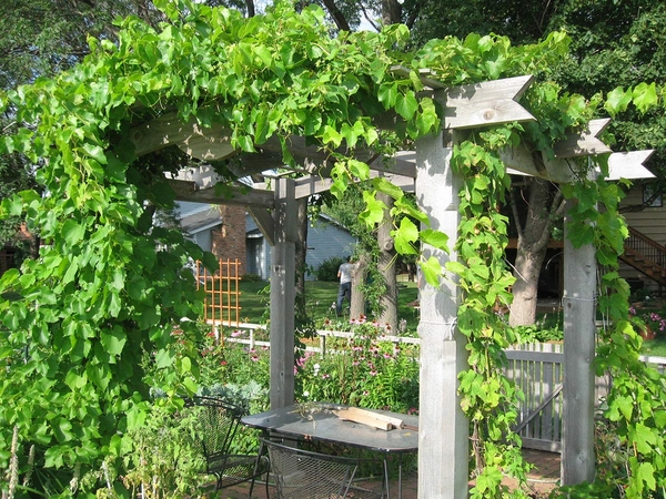 wooden arbor with vines backyard escape ideas