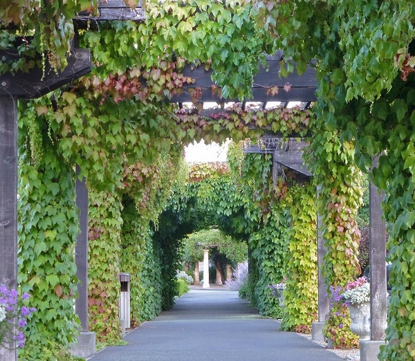 grape vine covered arbor wooden construction
