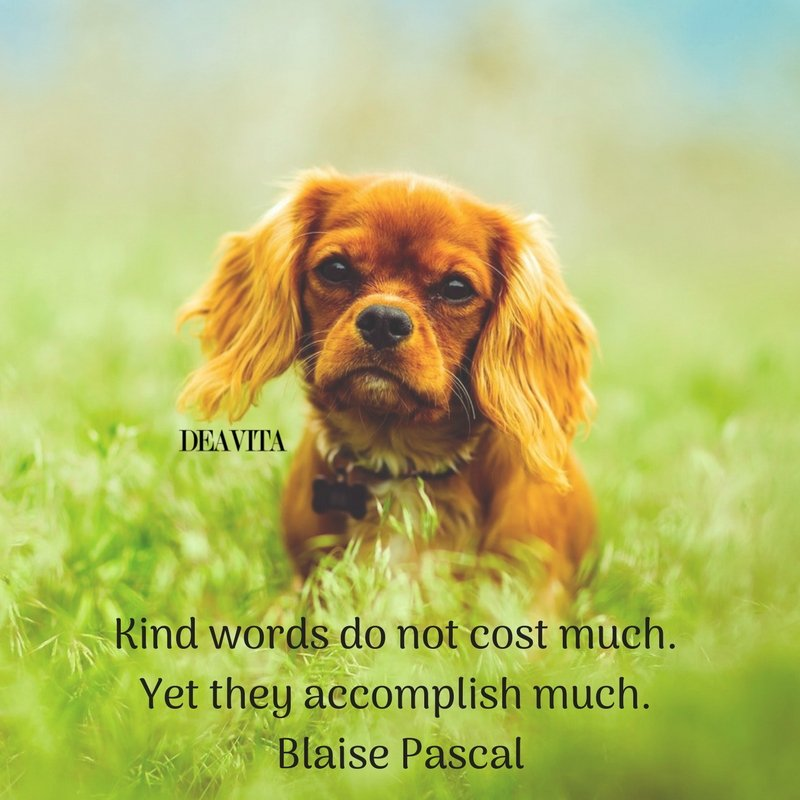 Kind words quotes with photos