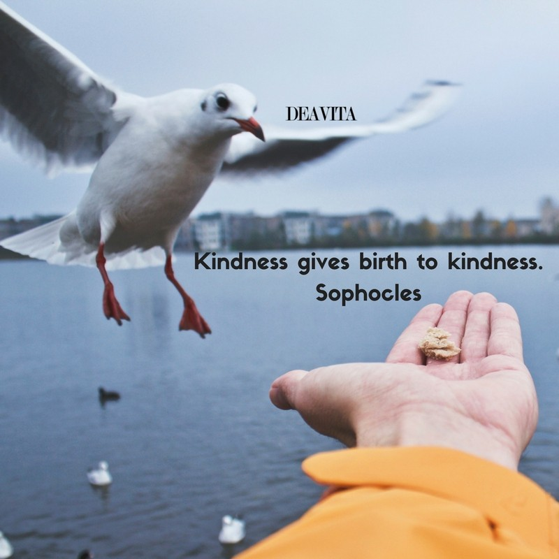 deep quotes Kindness gives birth to kindness