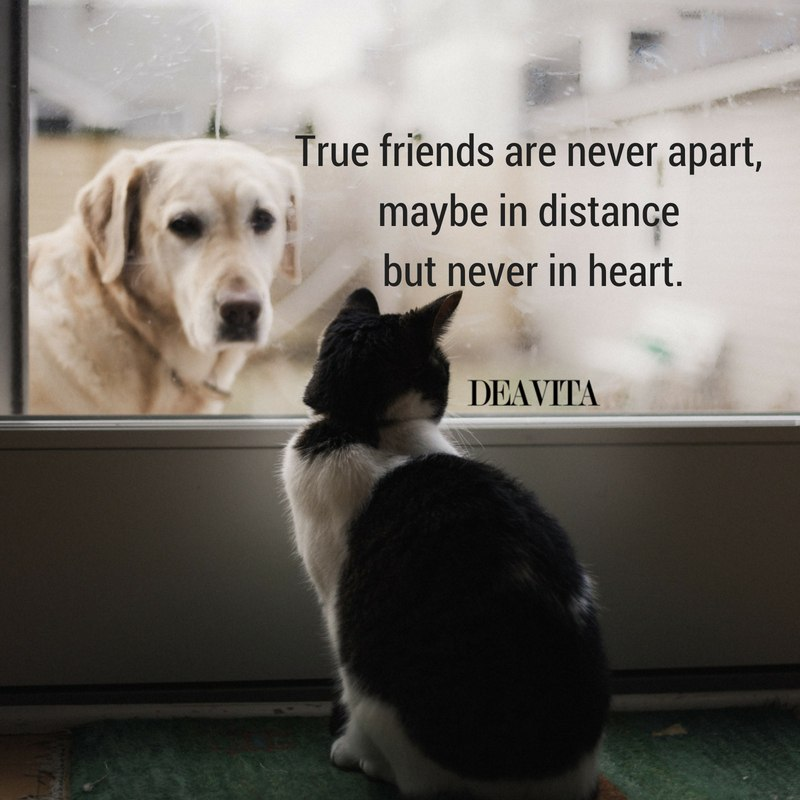 True friends short quotes with deep meaning