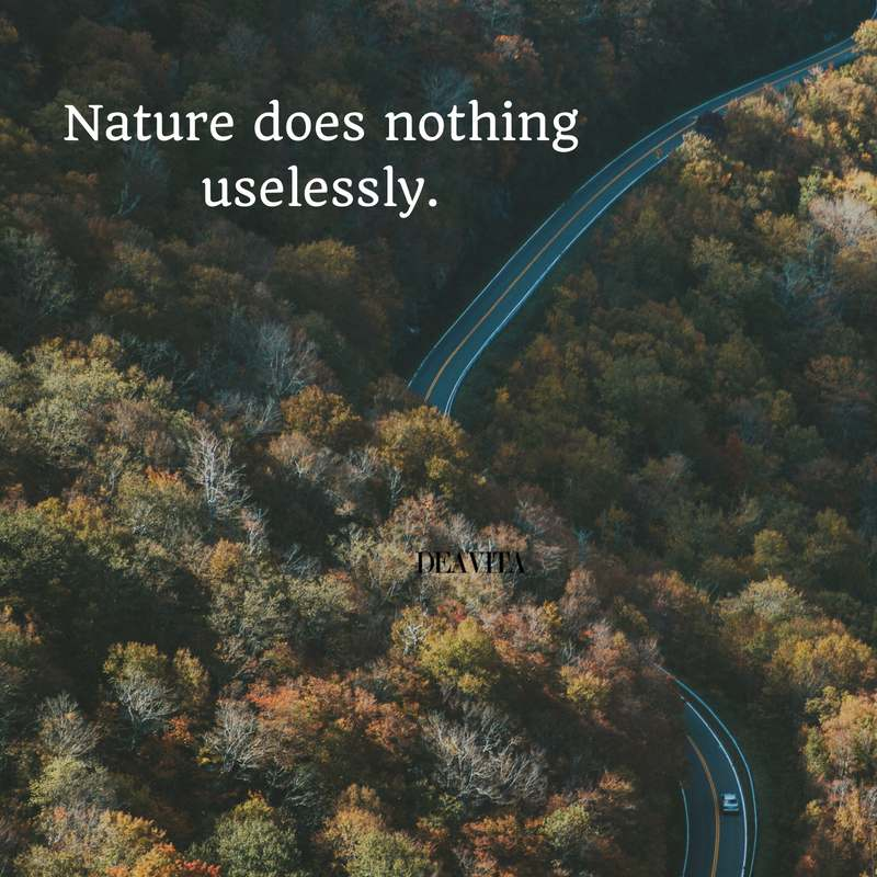 short inspirational quotes Nature does nothing uselessly