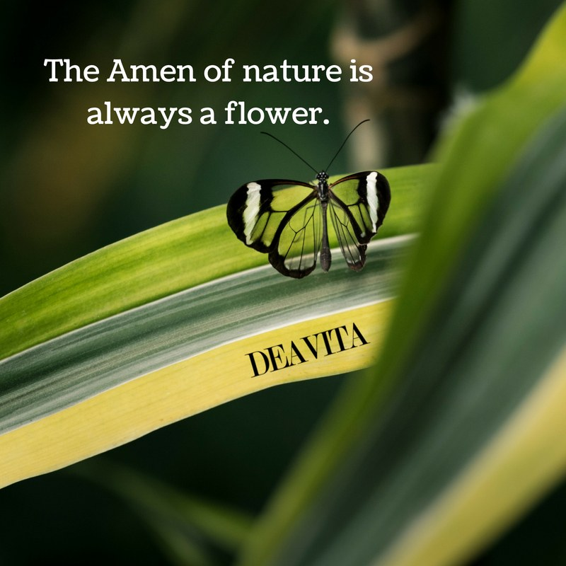 nature and flowers cute short quotes