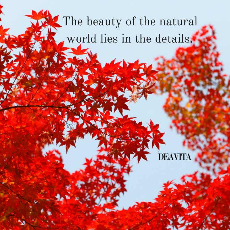beauty and nature inspirational quotes