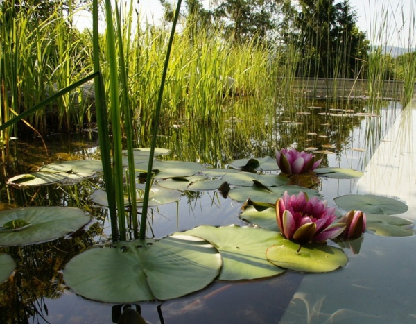 Water lily water plant beautiful natural design idea
