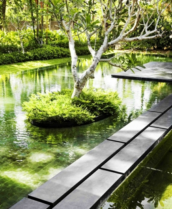 natural Pool Garden Plants sustainable construction