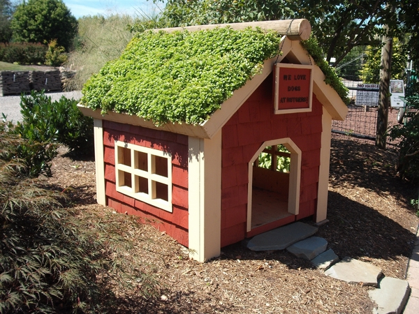 cute plans green roof