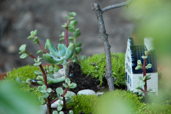 mini fairy garden plants house stone path