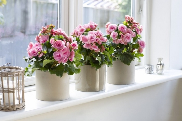 sill sill decoration flowers