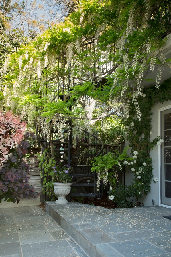 wisteria vine patio decorating ideas outdoor spiral staircase