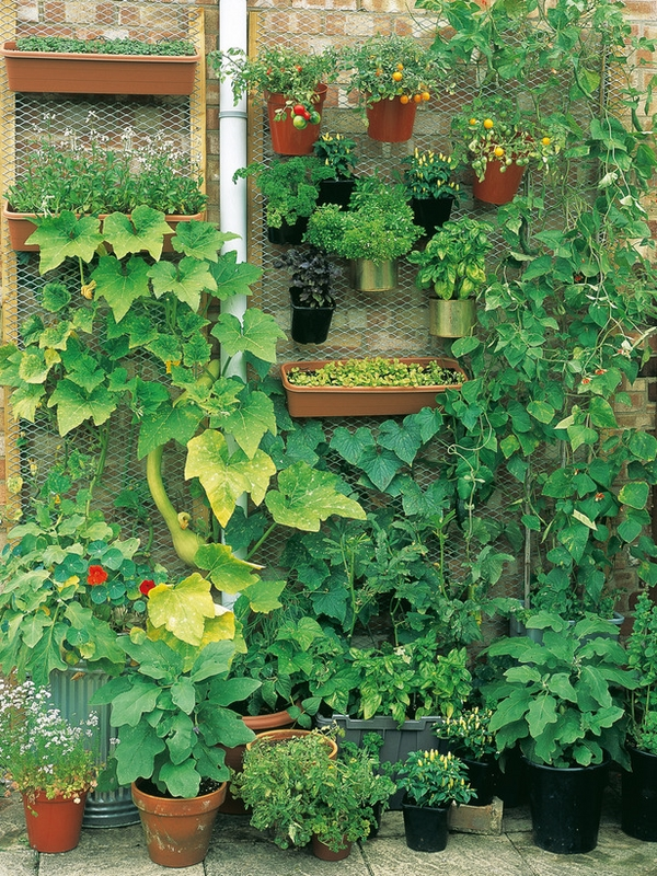vertical home gardening ideas