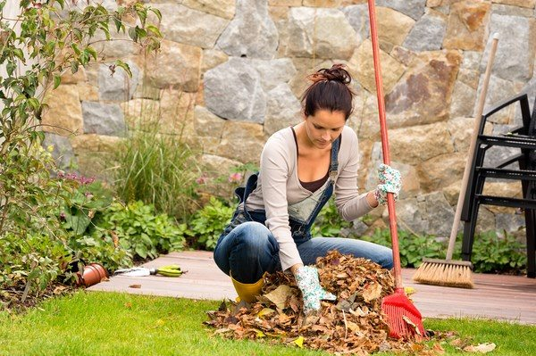 septic system maintenance tips cleaning fallen leaves avoid clogs