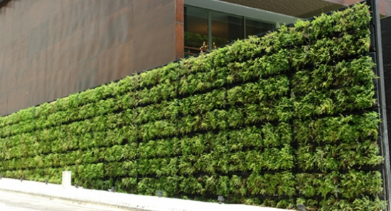 Green wall ideas windshield terrace