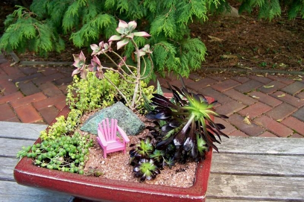 mini garden small pink chair plant
