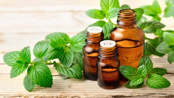 peppermint leaves and essential oil home remedies